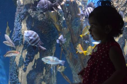 Aquarium 2013